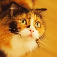 京都四条猫カフェ Cafe犬猫人&Cafe犬猫2staffブログ